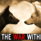 Free PowerPoint Sermon: The War Within (Two Wolves)