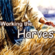 Free PowerPoint Sermon: Working the Harvest